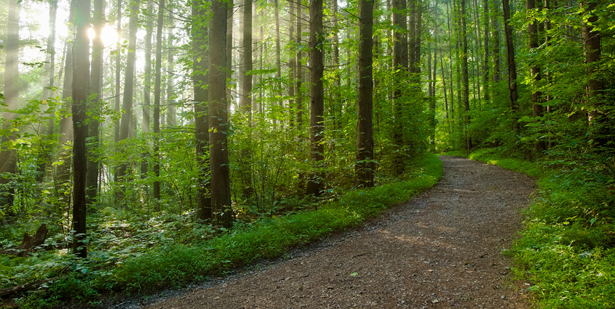 Image of trail through the forest