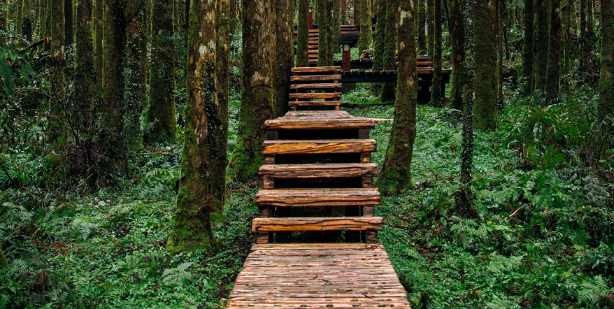 Wooden stairs in a forest